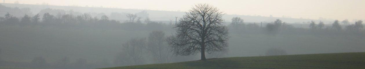 Bürgerinitiative Baumschutz Hohe Börde